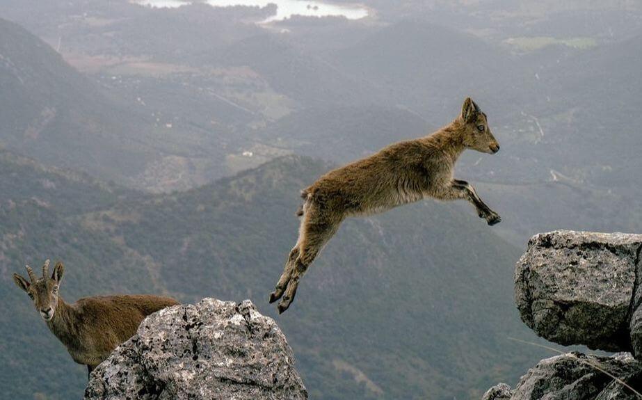 Pivot, then take a Leap of Faith