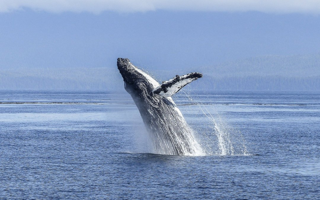 The buyer journey – why sales are like whales